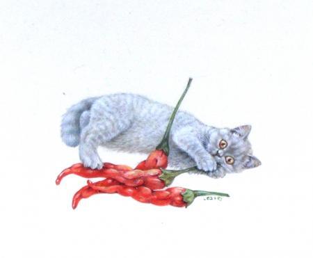 http://club-3t.ru/uploads/posts/2010-01/1264858870_cats_cayenna.jpg