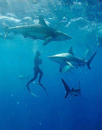 Танцы с акулами