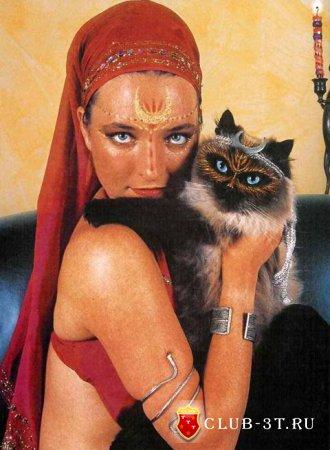 Боди-арт для кошек