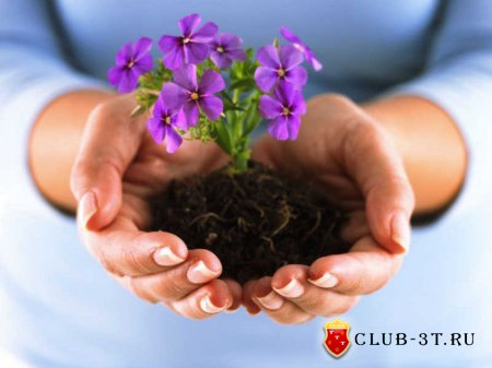 Выращивание цветов – увлечение для терпеливых