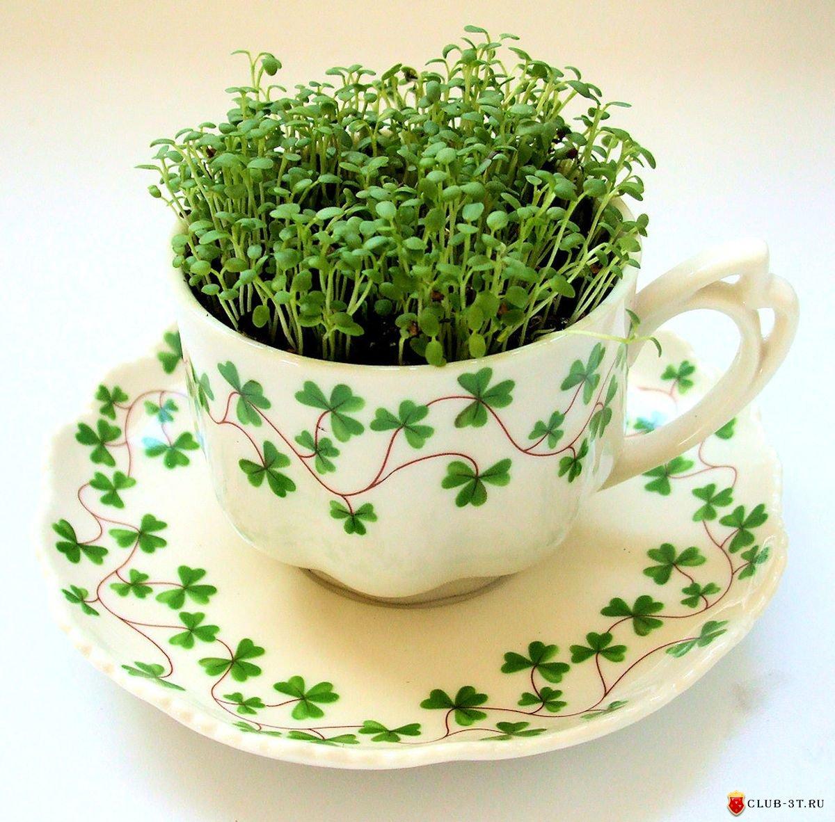 Микрозелень в домашних условиях фото