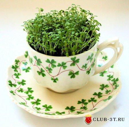Микрозелень - витамины круглый год